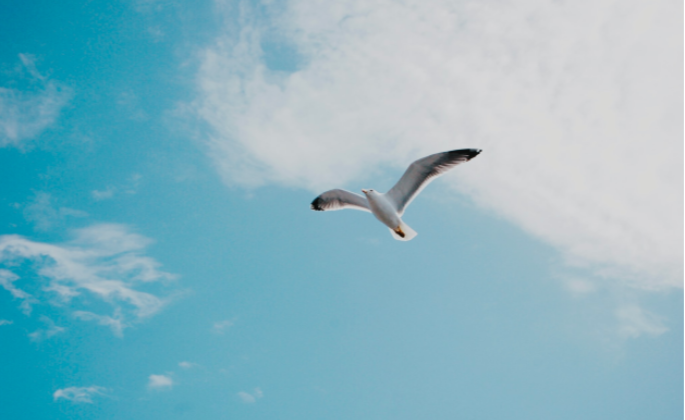White bird flying through blue sky