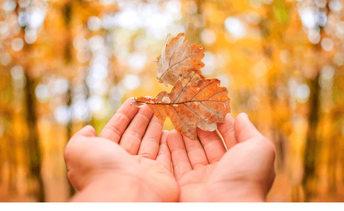 An autumn leaf in a person's hands