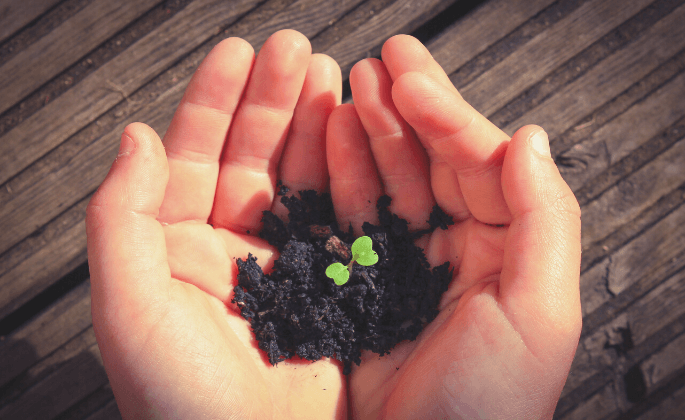 Hands with soil and leaf bud