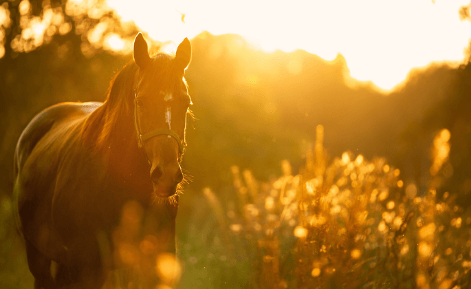 A horse in a sunset